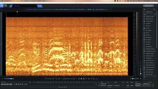 Damage Control on Noisy Field Recording